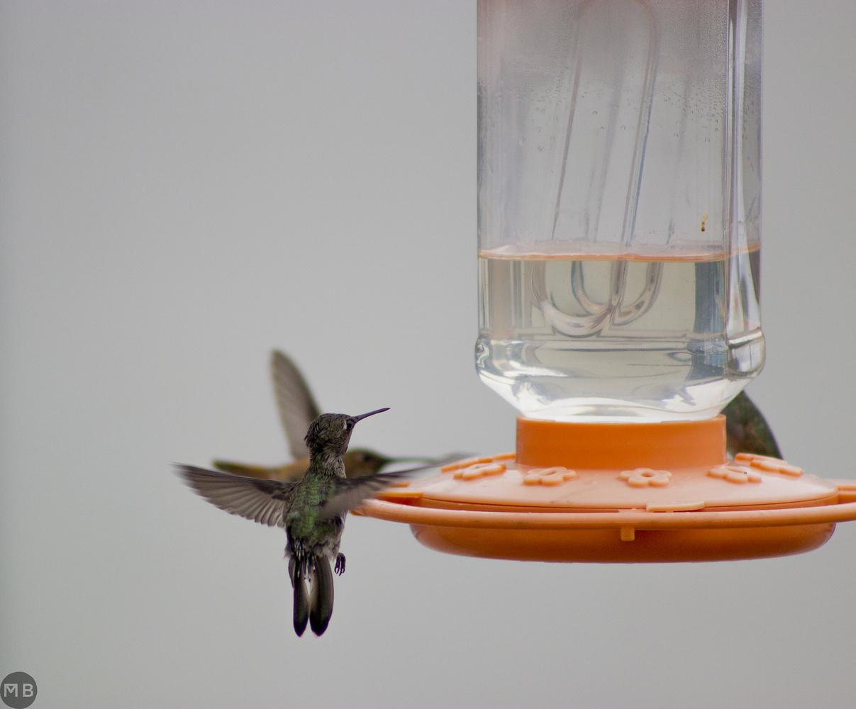Hummingbird by Markus Baumbach