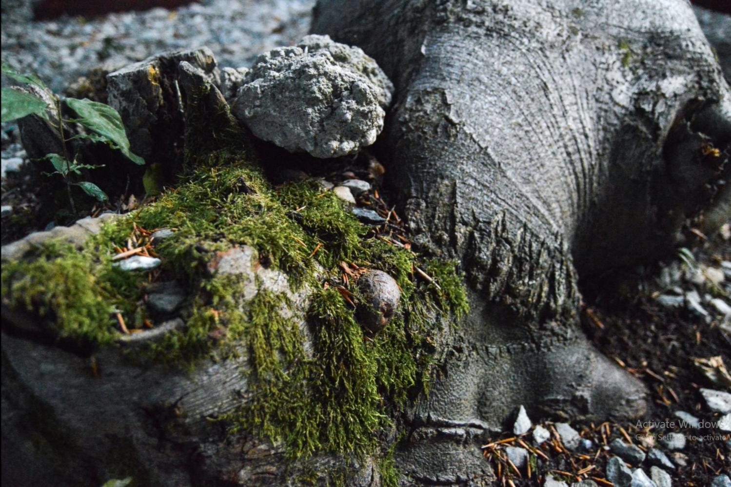 Tree Moss by Moisi Aniska