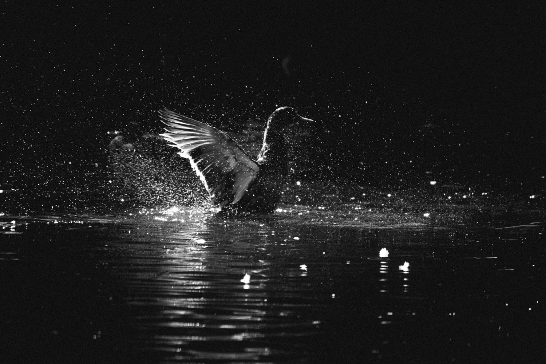 Magic in the Water by Tamara Perrozzi