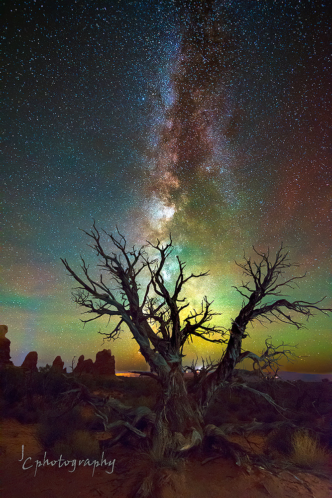 Milky Way setting over an old Juniper by Jim Craft