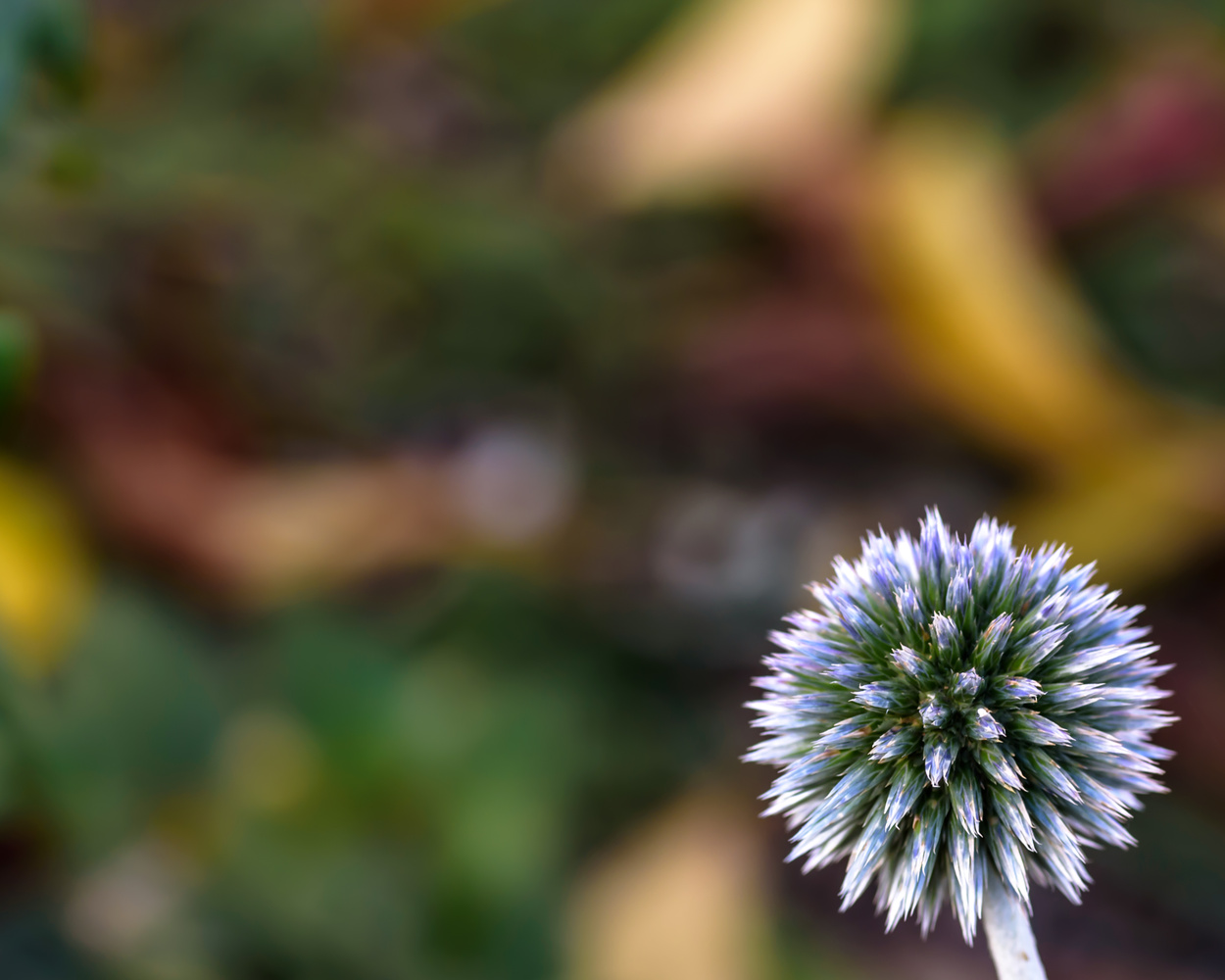 Flower Head and Bokeh by Kevin Drury