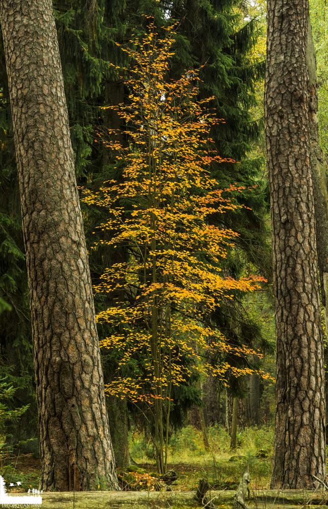 Autumn by Jacopo Cantoni