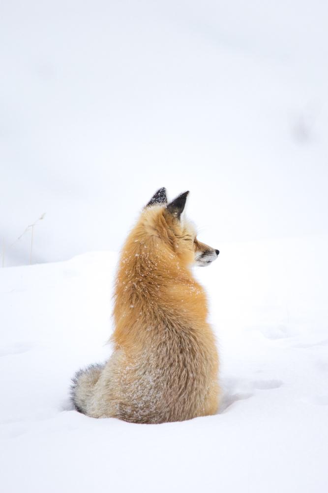A Snowy Survey by Ashleigh Magill