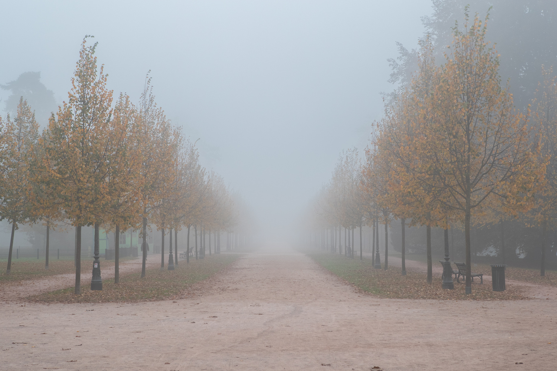 Radiant Fog Foliage by Ashleigh Magill