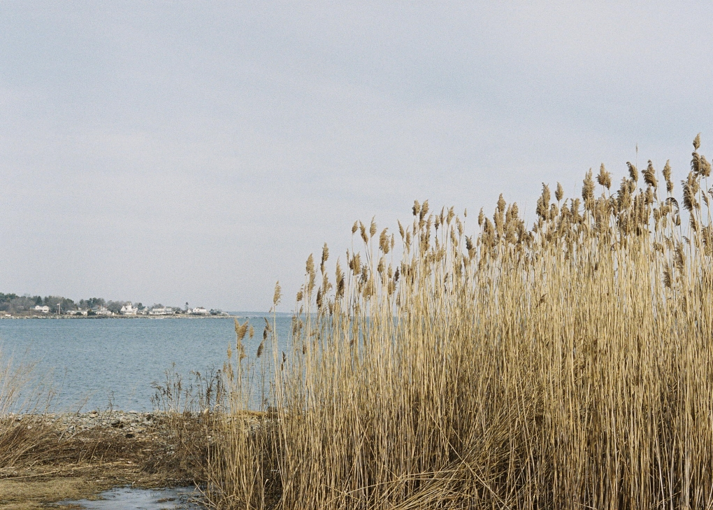 Rye, NH - Portra 400 by Ray Larose