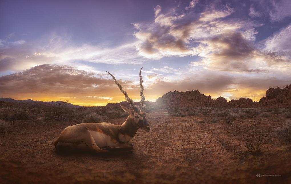 Antelope Canyon by Felix Hernandez
