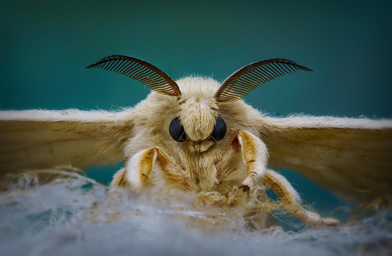 The Silk Moth by Liza Rock