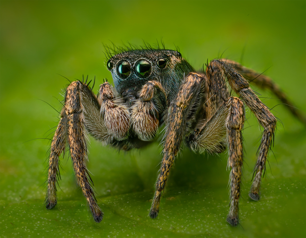The Adorable Jumper by Liza Rock