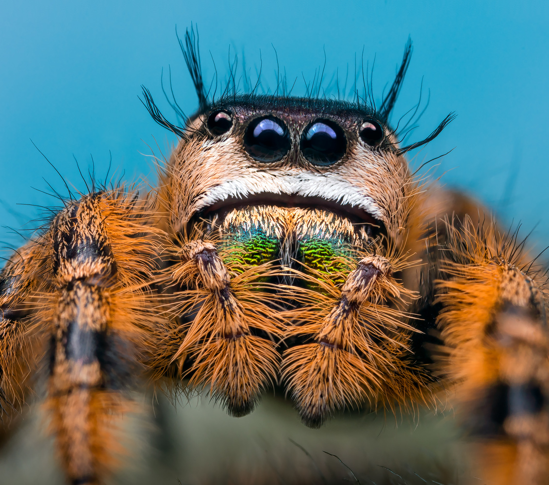 Jumper Portait by Liza Rock