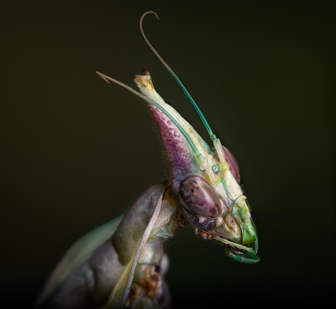 The Alien Queen by Liza Rock