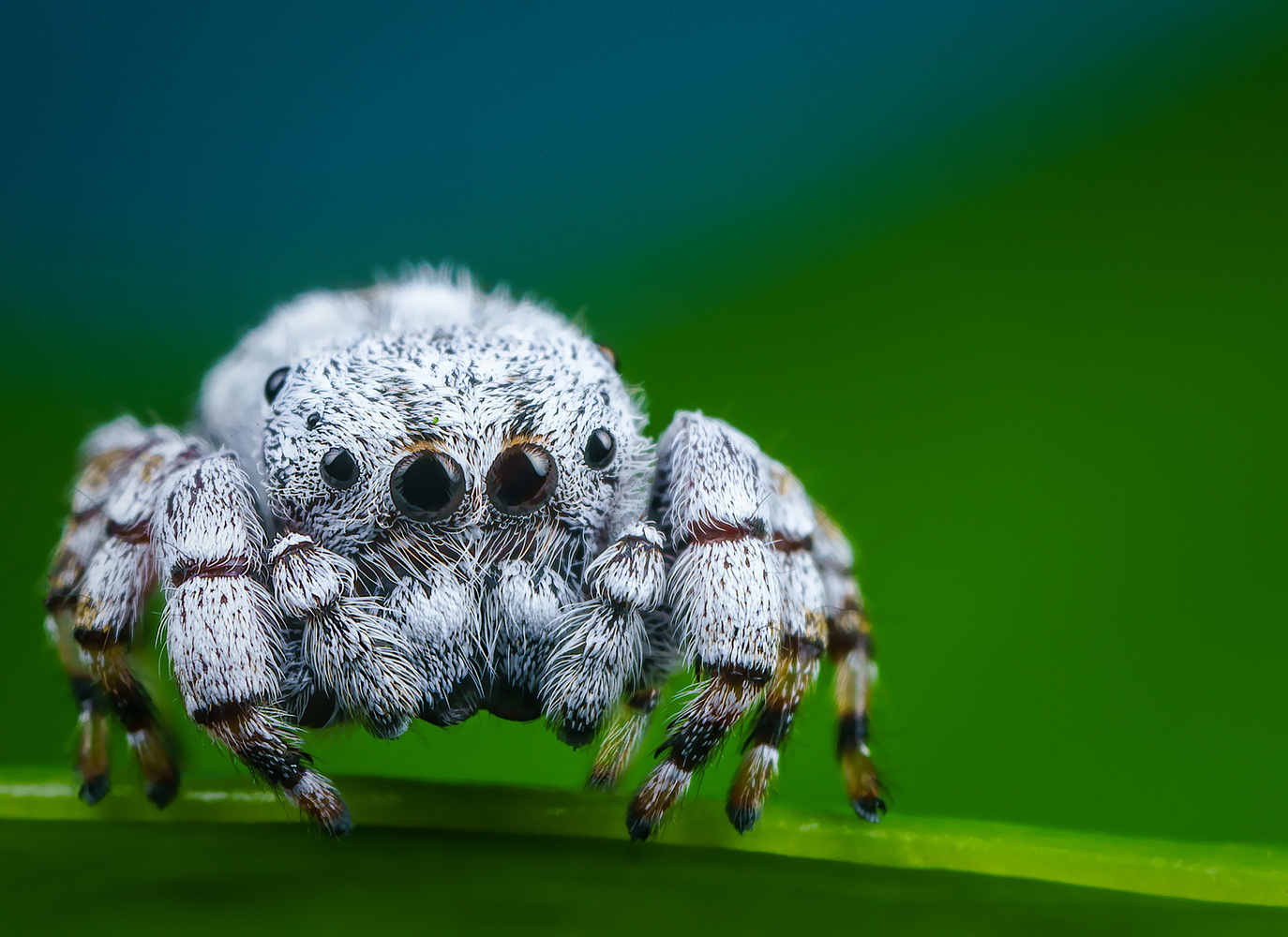 The Cutest Spider Ever! by Liza Rock