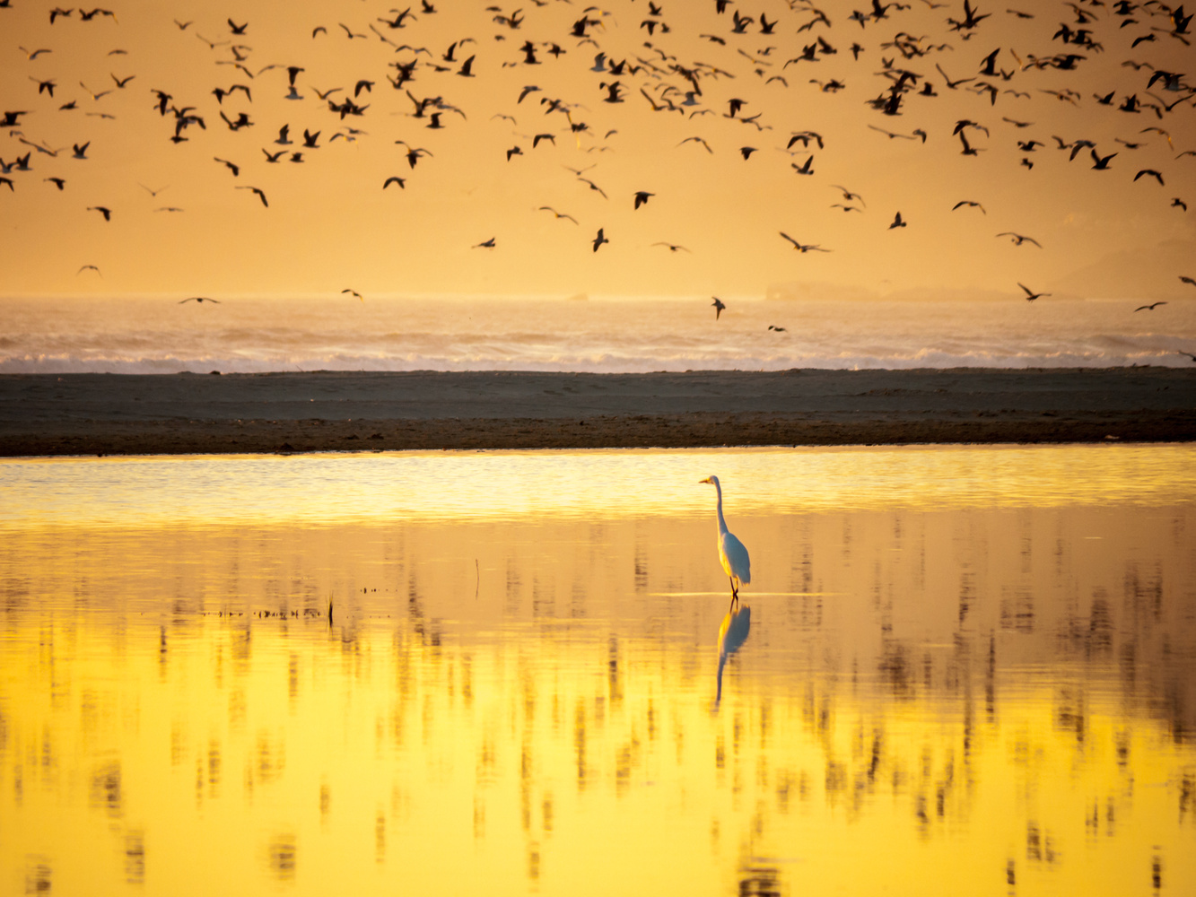 Egret and others by Peter Sebastian Masny