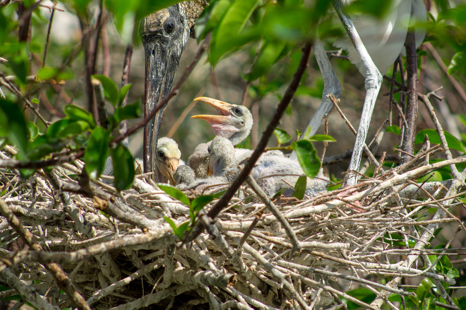 Mom and New Babies  by John Indiveri