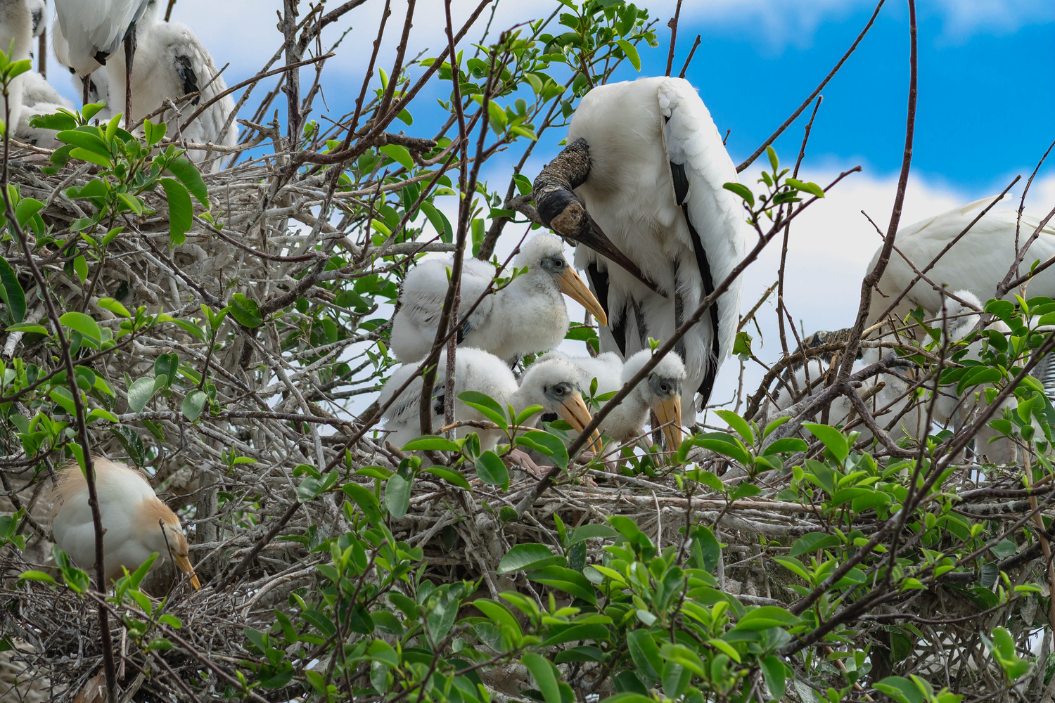 Mom and Babies  by John Indiveri