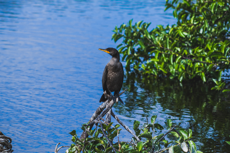Bird Hanging out by John Indiveri