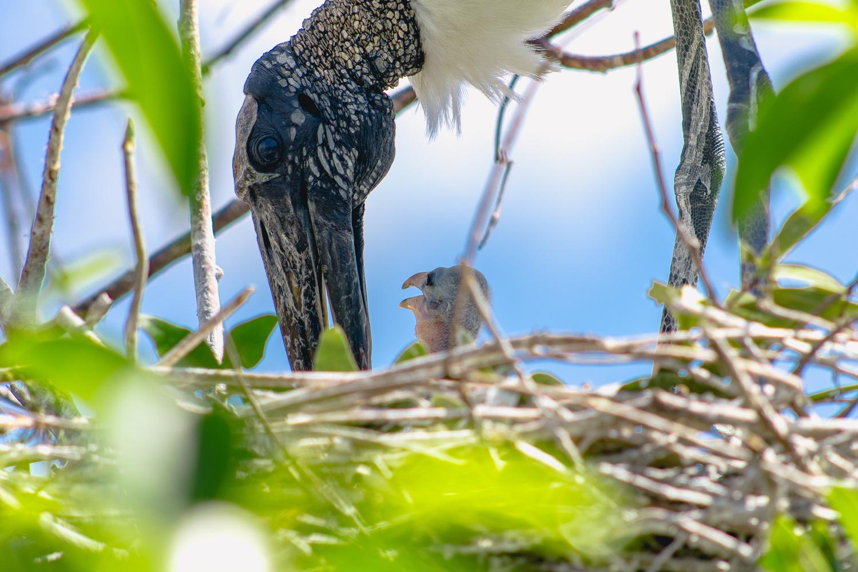 Mom and Baby Bird by John Indiveri