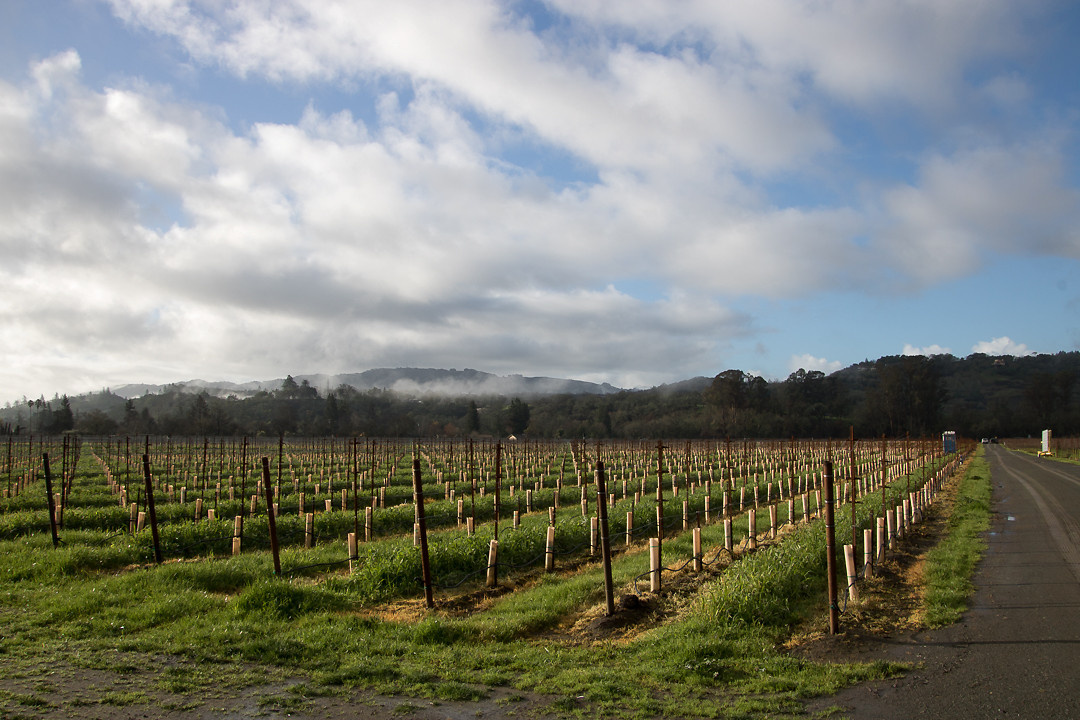 Foggy morning by Jay Gamel