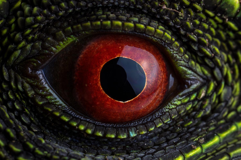 Red eye by Sebastian Di Domenico