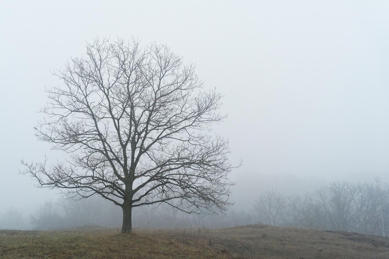 Lonesome tree by Jan Grau