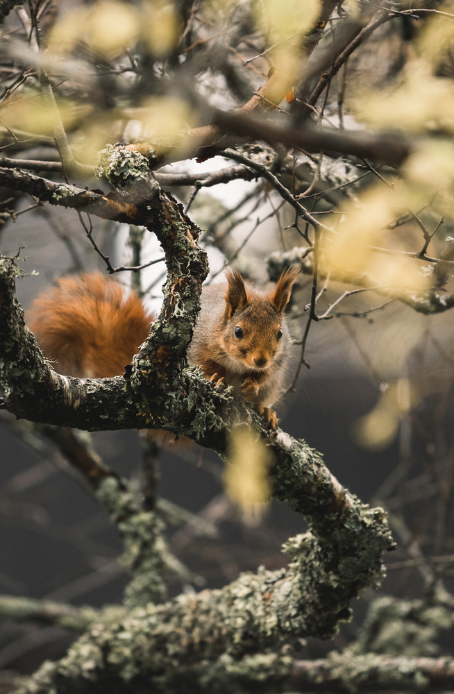 Squirrel by Tom-Are Svenning