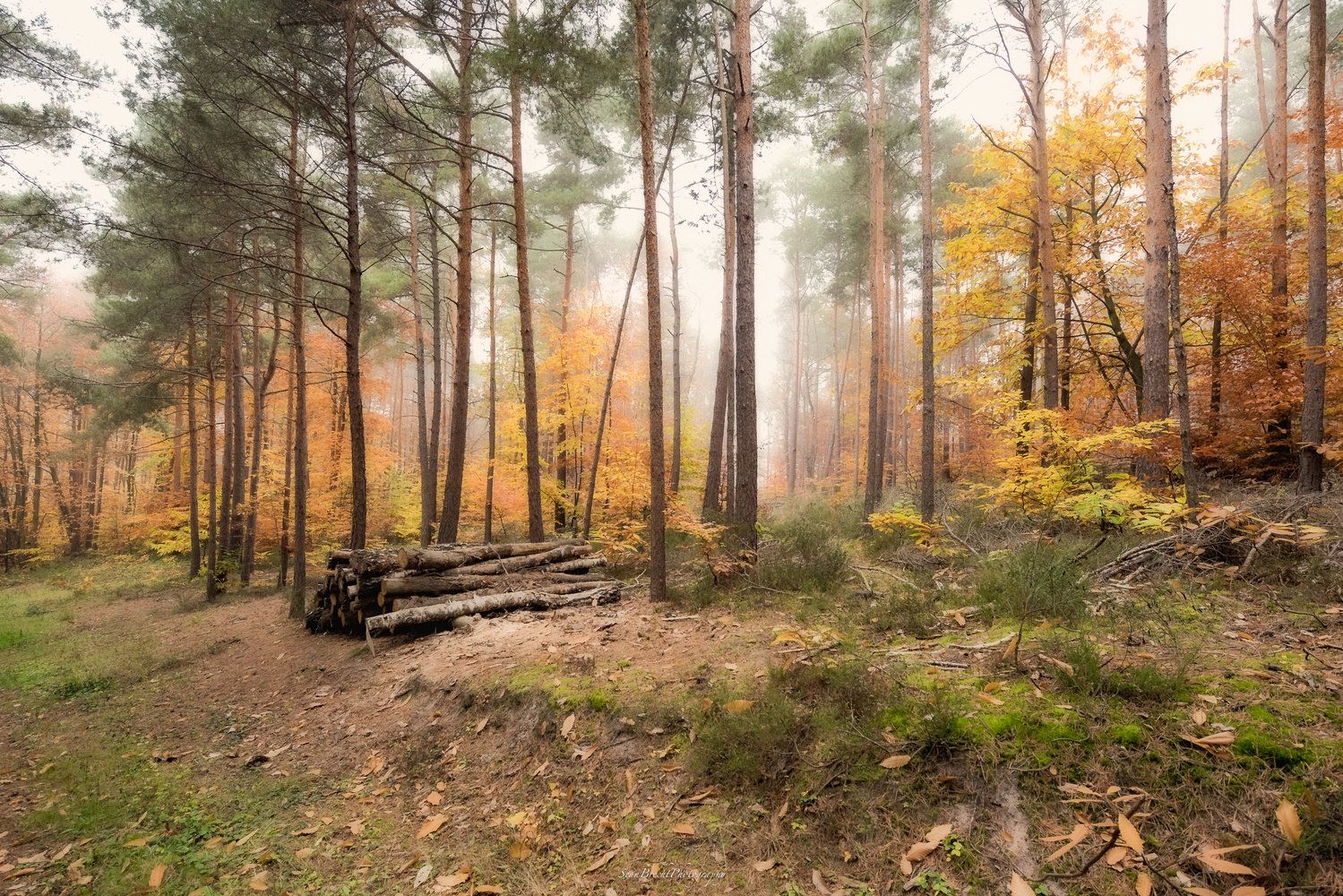 A Walk in the Palatinate 2 by Sean Brecht
