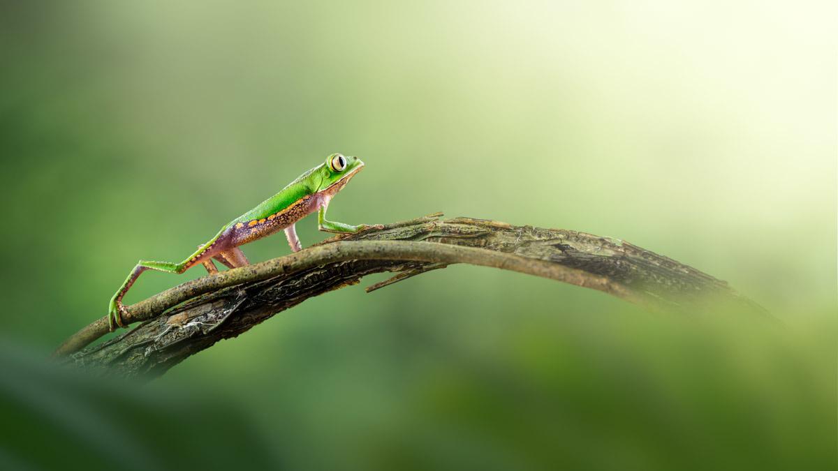 To the Light | Amazon rainforest, Ecuador by Thomas Andlauer