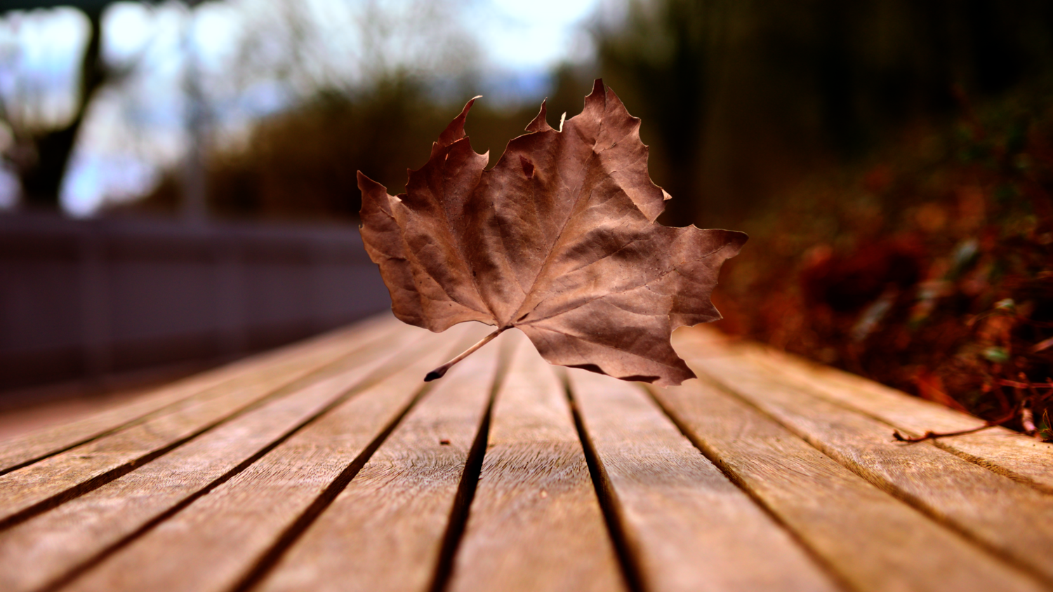Leading to Leaves by Timothy McGlinchey