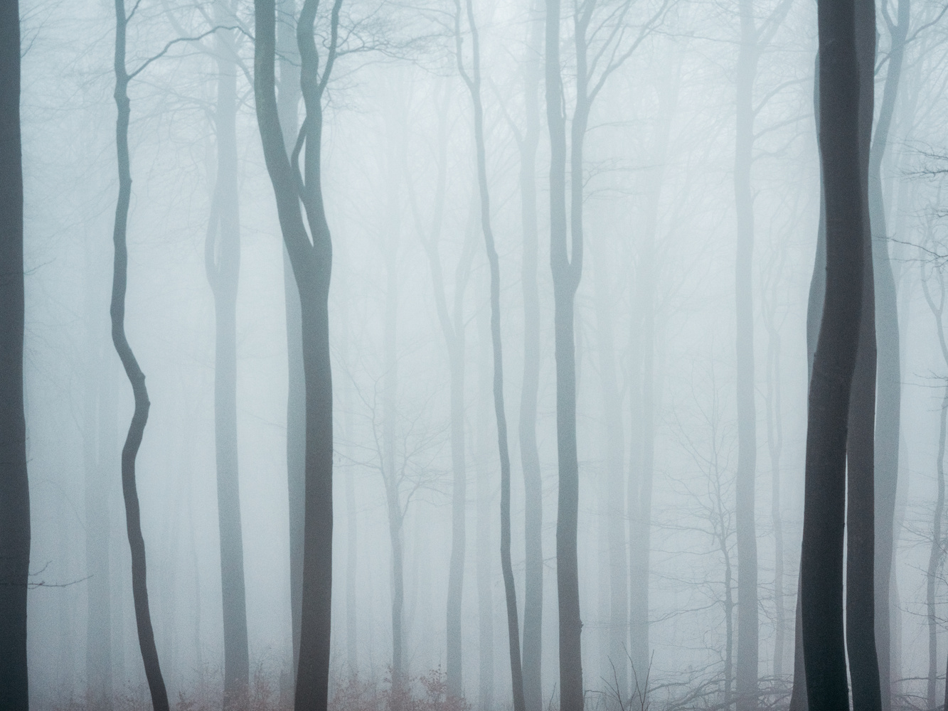 Moody Forest by Sam Green