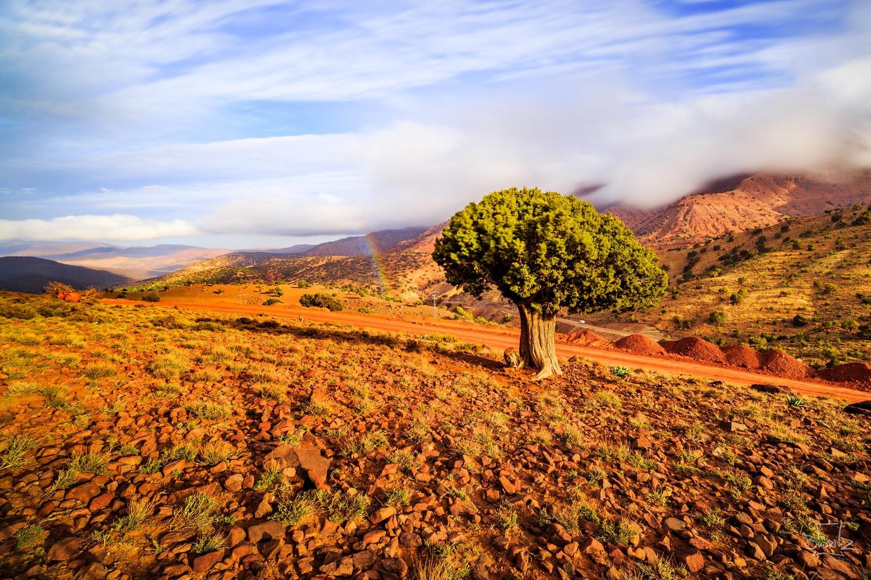 lonesome tree, epic view by Bu Örnz