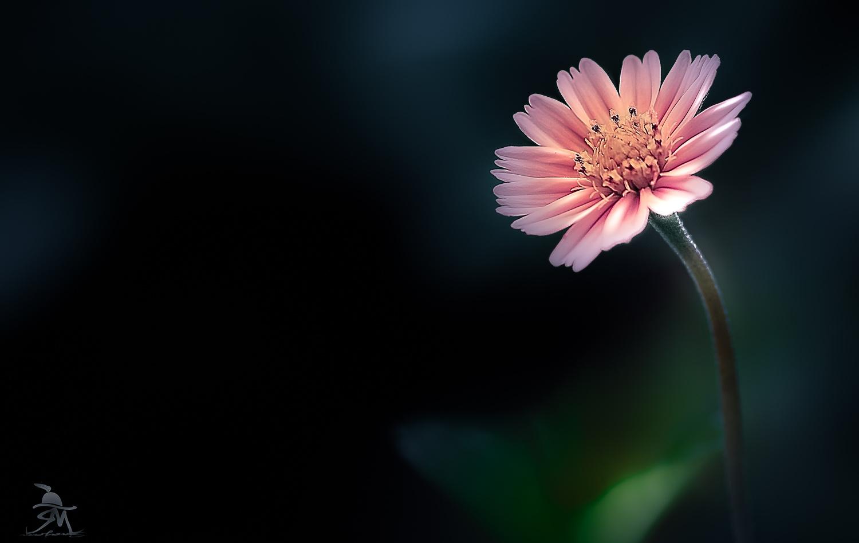 Lonely Flower by Saajan Manuvel