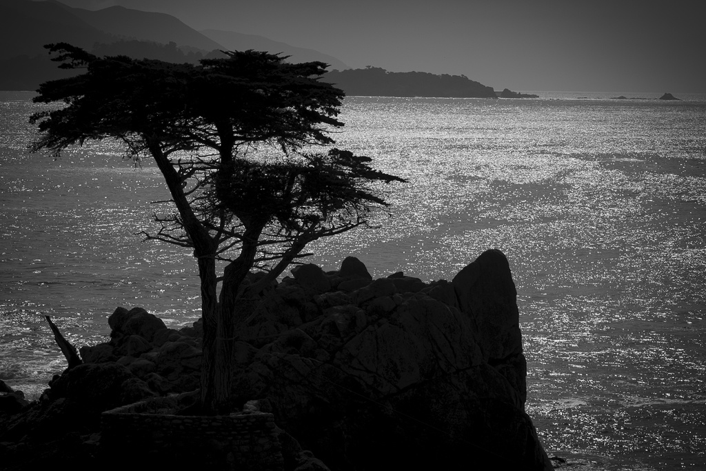 The lone cypress by Rick Pappas