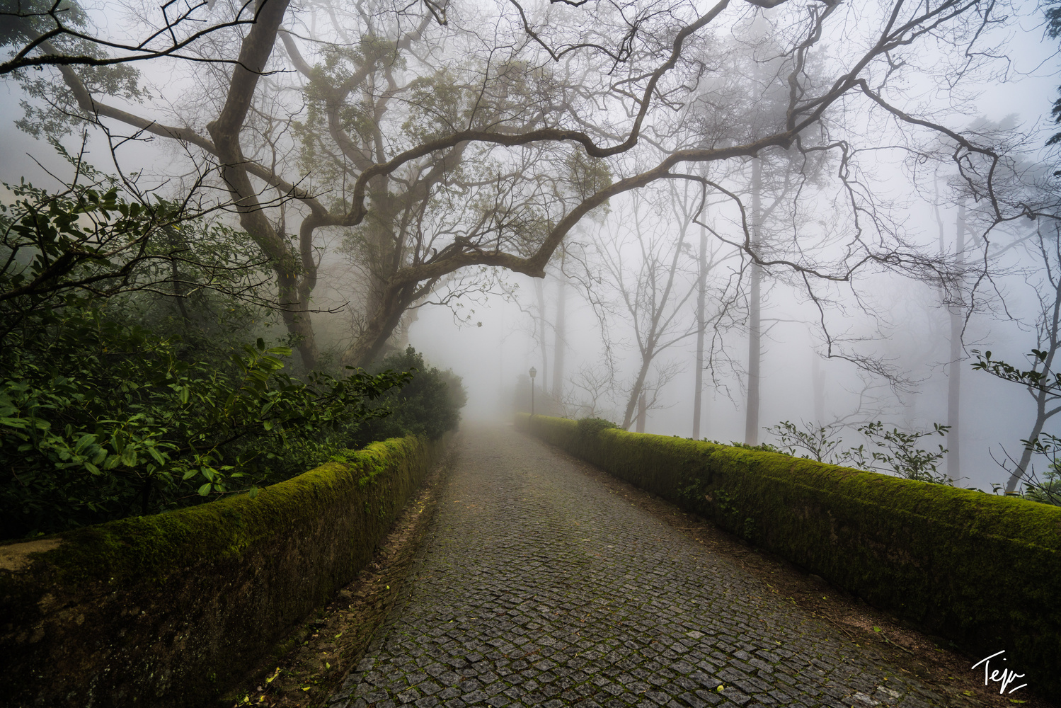 Mists of Sintra by Teja Pamganamamula