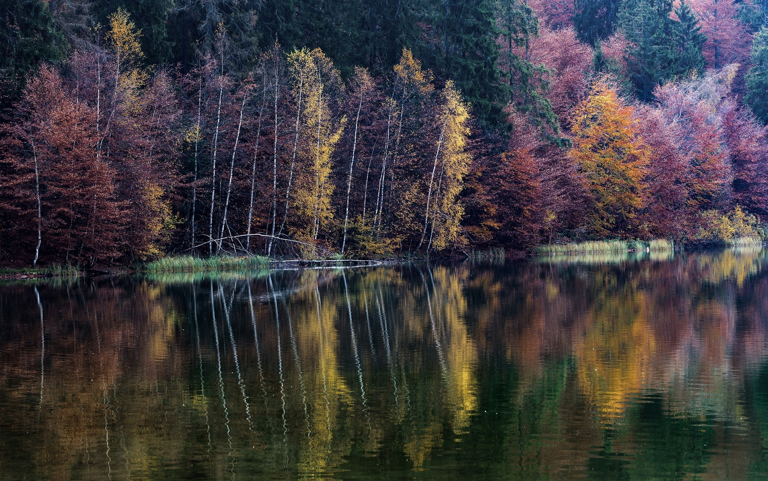 Autumn colors by Andy Ruxanda