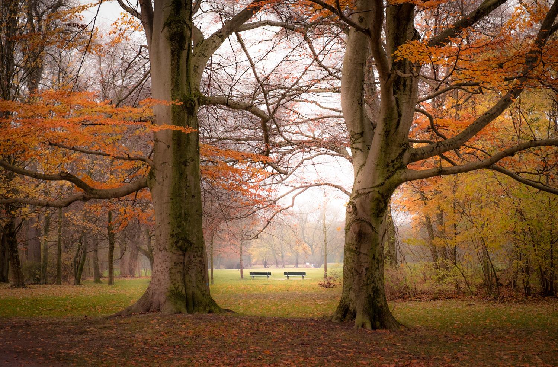 Autumnal Gate by Fine Ch