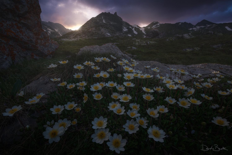 Flowery dream by Davide Beretta