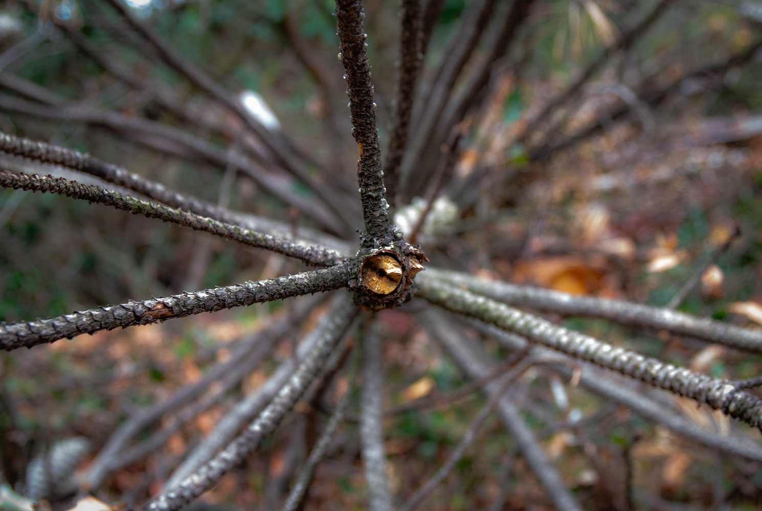 Nature Patterns by Daniel Boavida