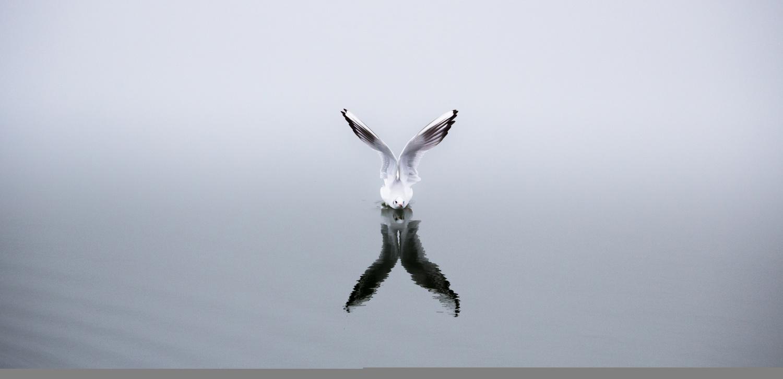 Yin and Yang by Daniel Boavida