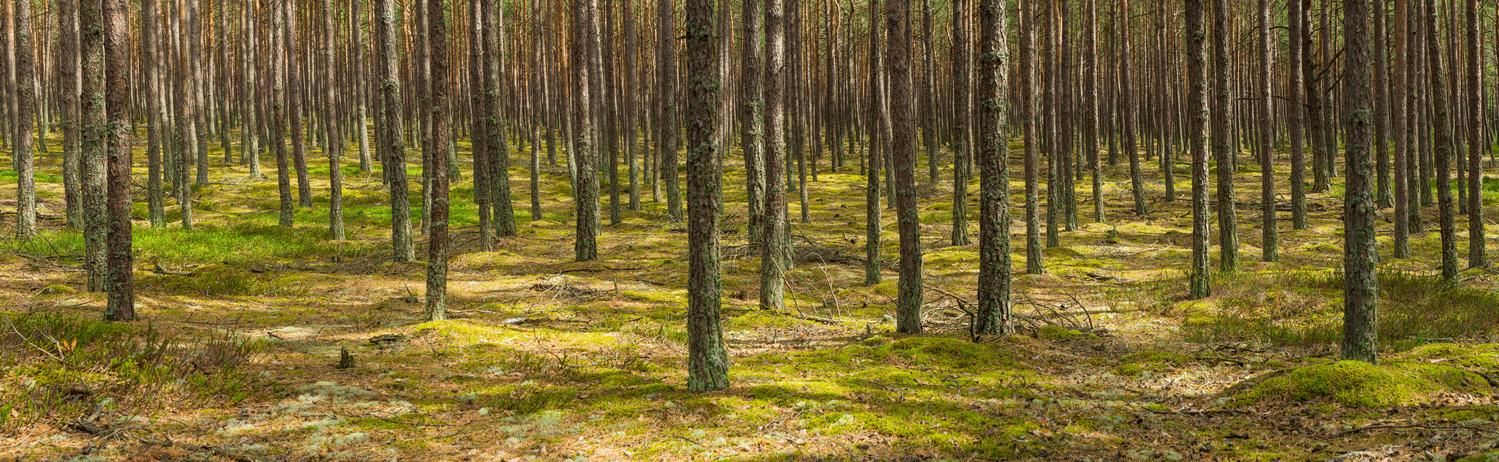 Green Silence by Jan Kimla