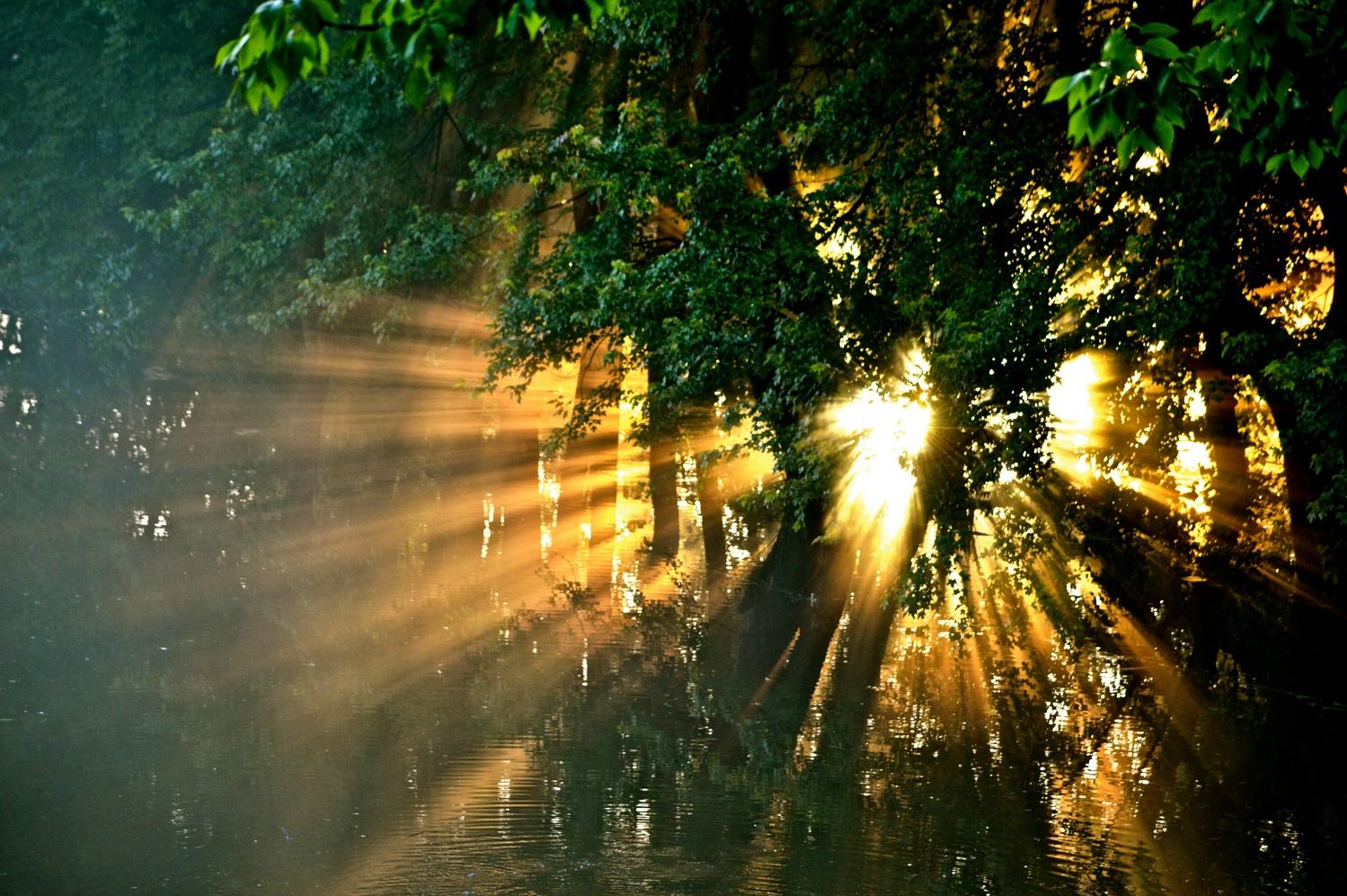 Sun Rays by Patricia Sebilian