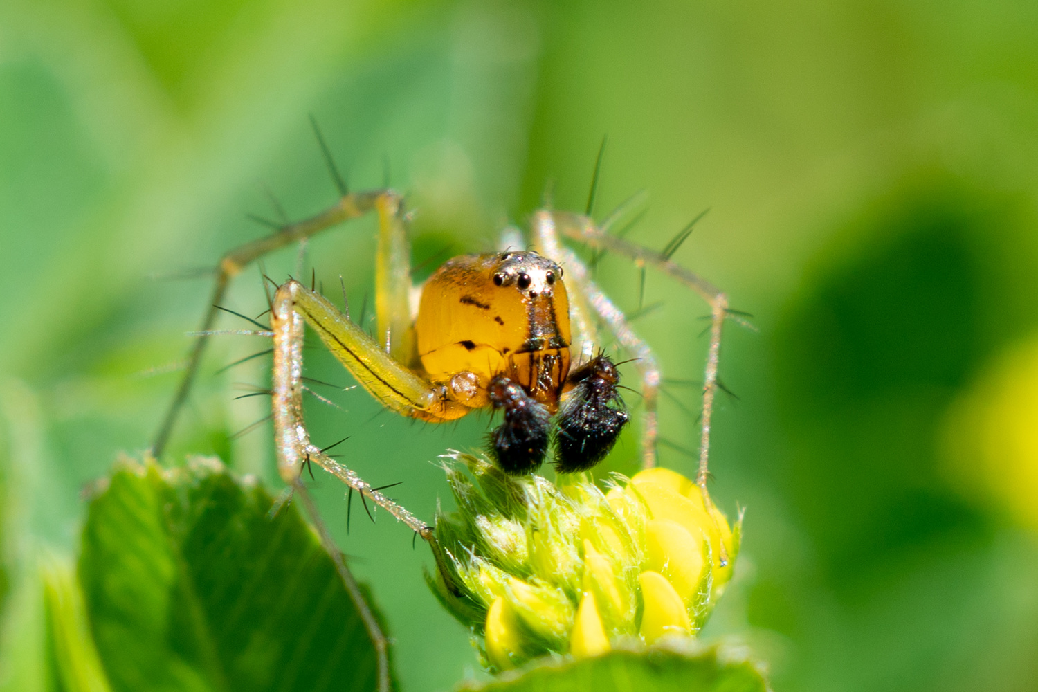 Cute Spider by Justin Lauria