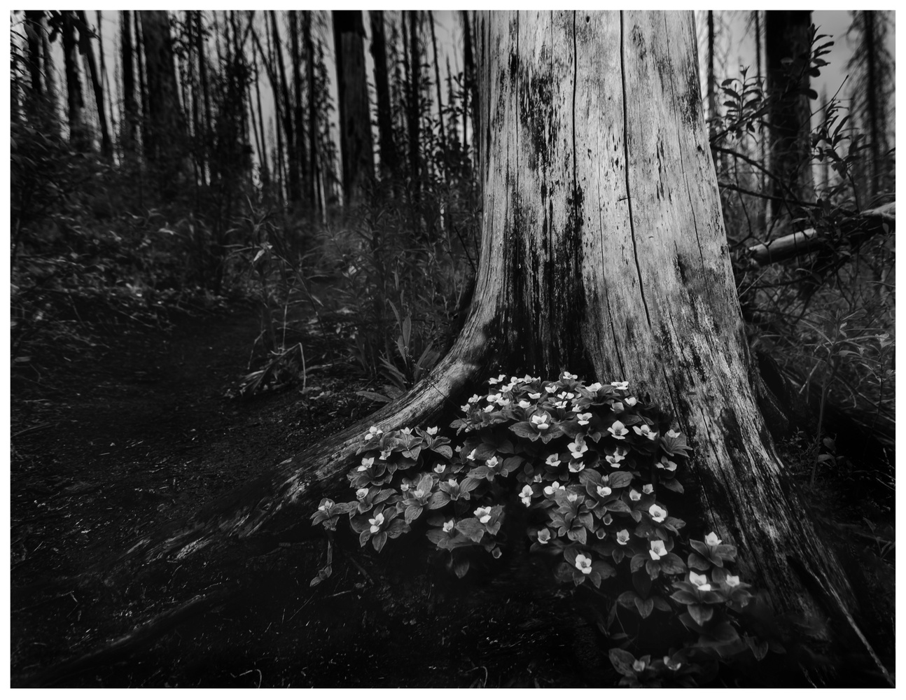 Shade of The Tree by Matthew Roberge