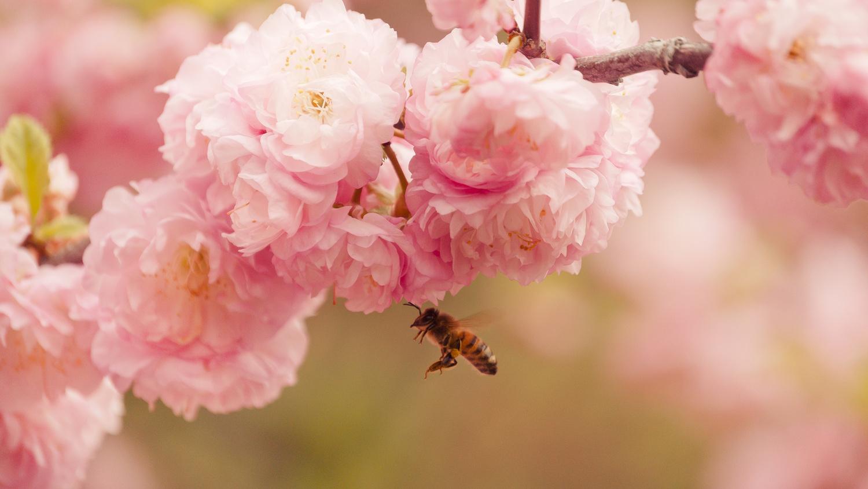 Flower Inspector by Matthew Roberge