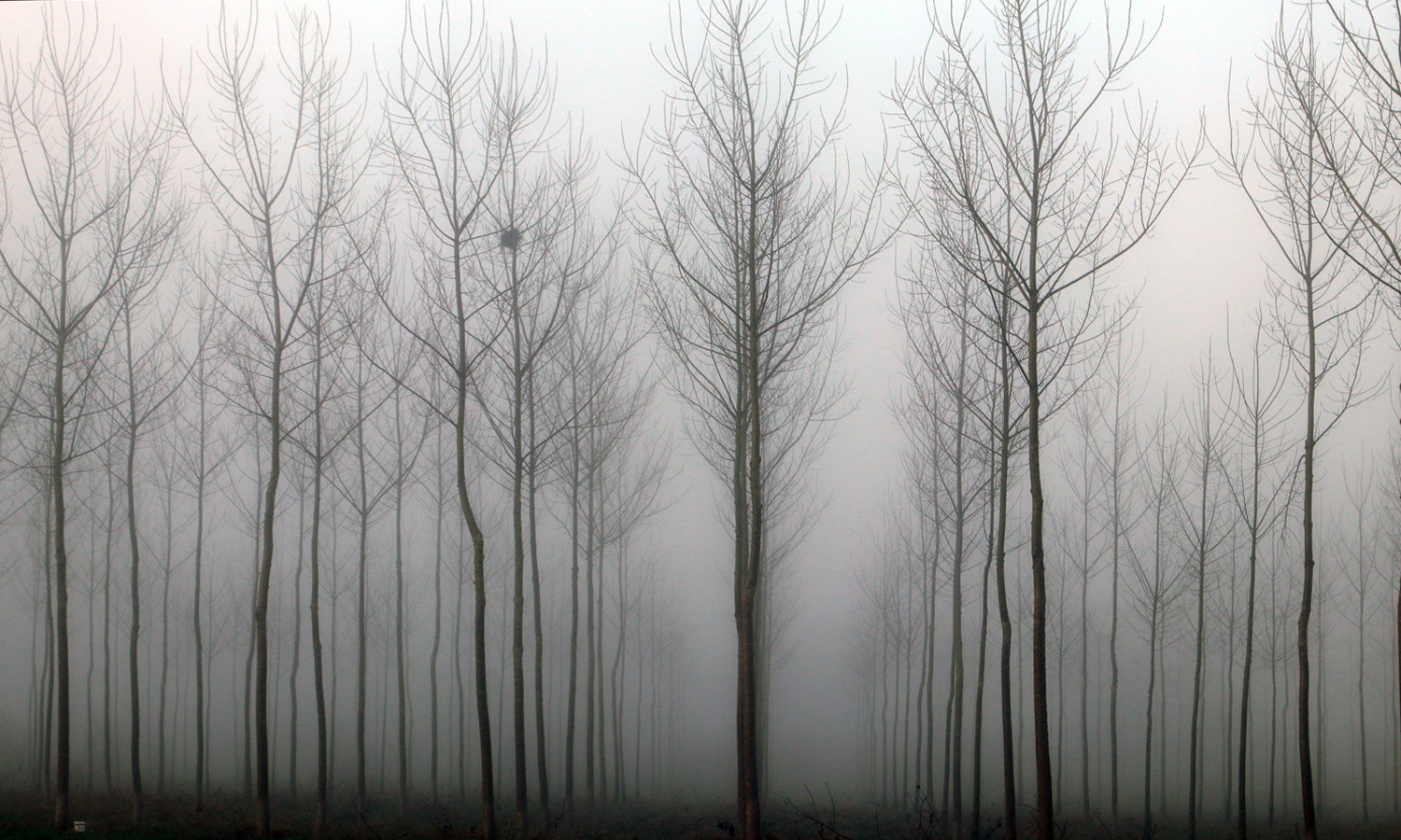 Ghost Trees by Alex Lancashire