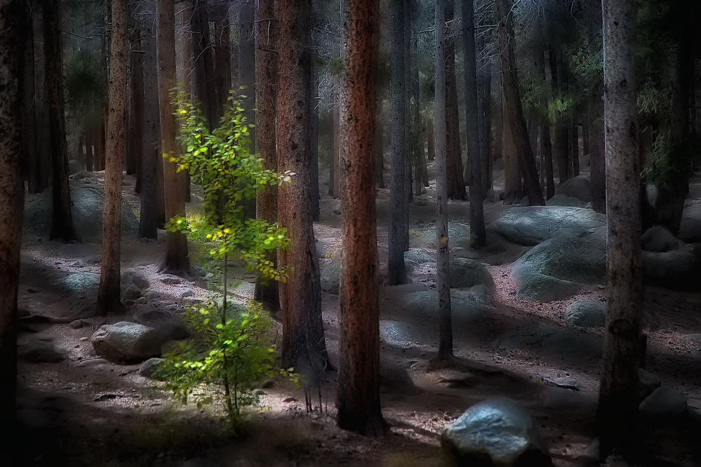 Forest Shadows by Bohdan Makolondra