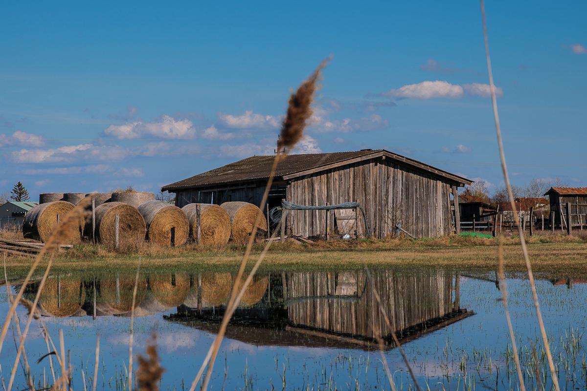 barn in in eastern Austria, Apetlon by Thomas Schwinn