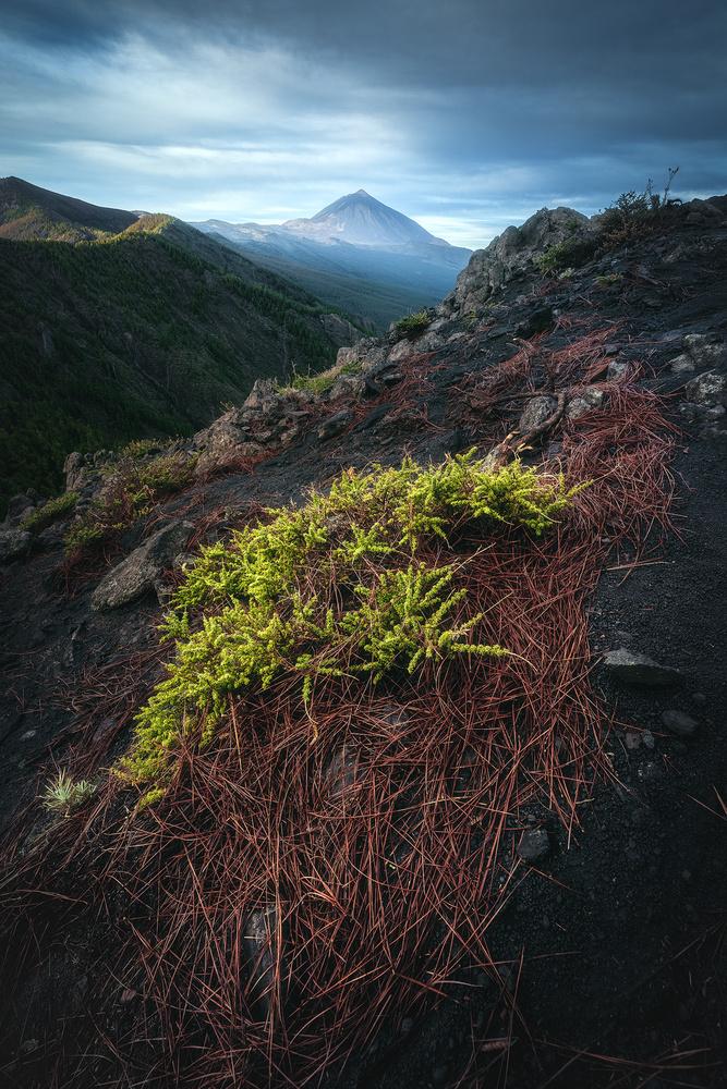 Tenerife - Teide Plateau by Jean Claude Castor