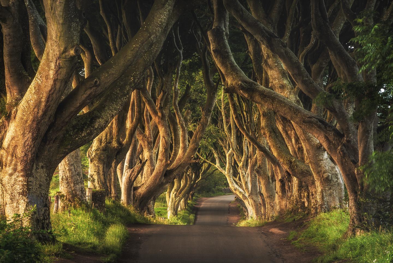 King's Road by Jean Claude Castor