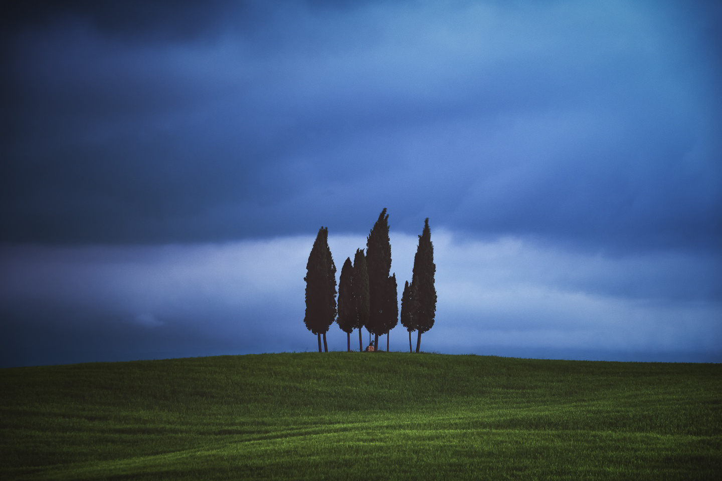 Tuscany - Cypress Hill by Jean Claude Castor