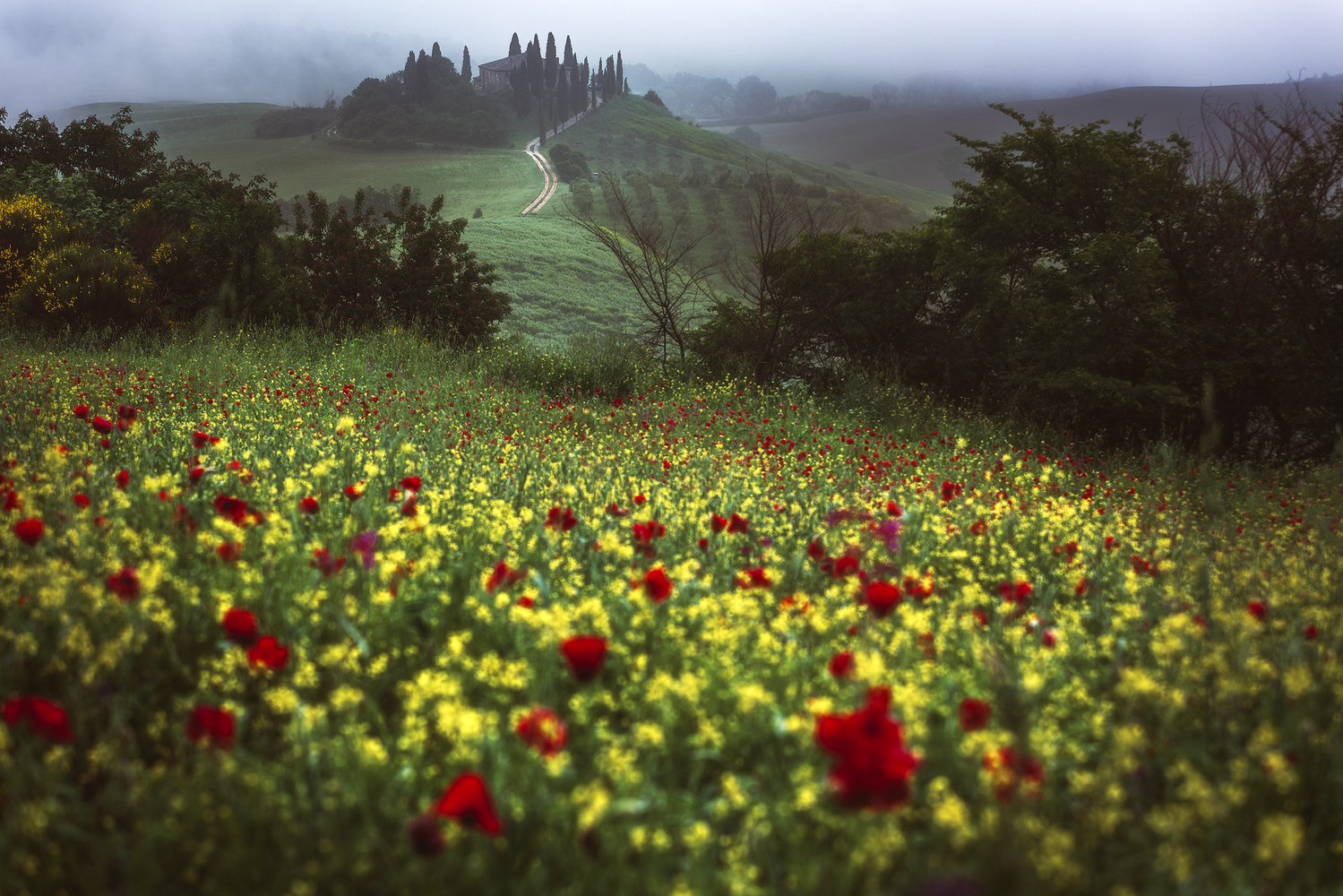 Tuscany - Springtime by Jean Claude Castor