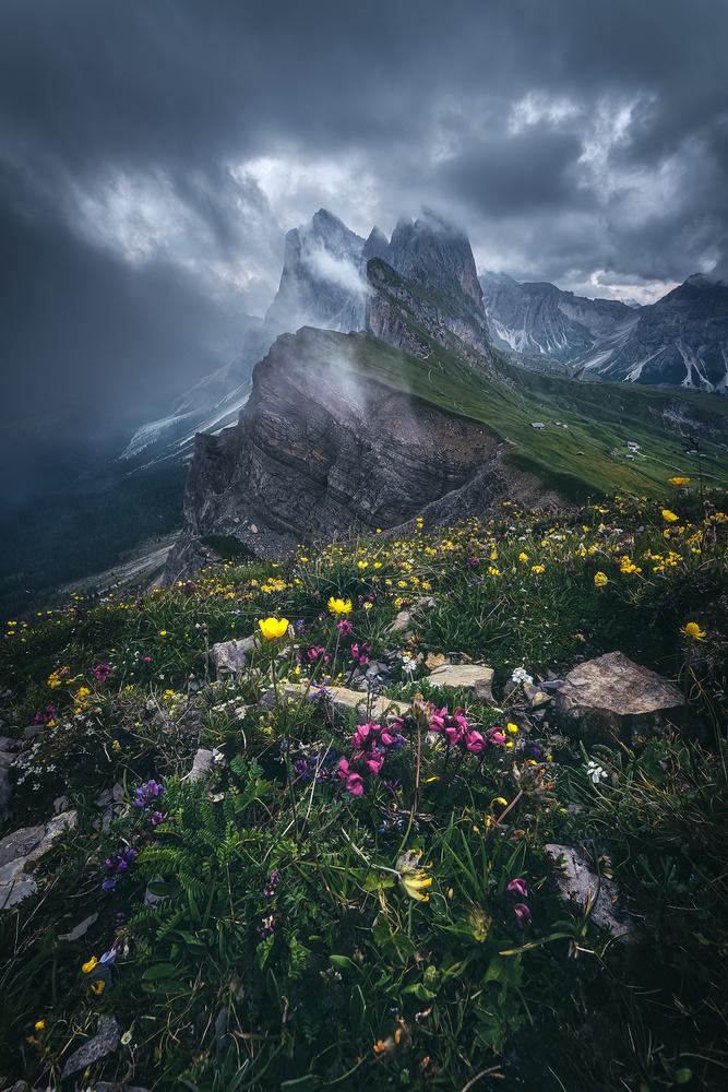 Dolomites - Seceda 2500 by Jean Claude Castor